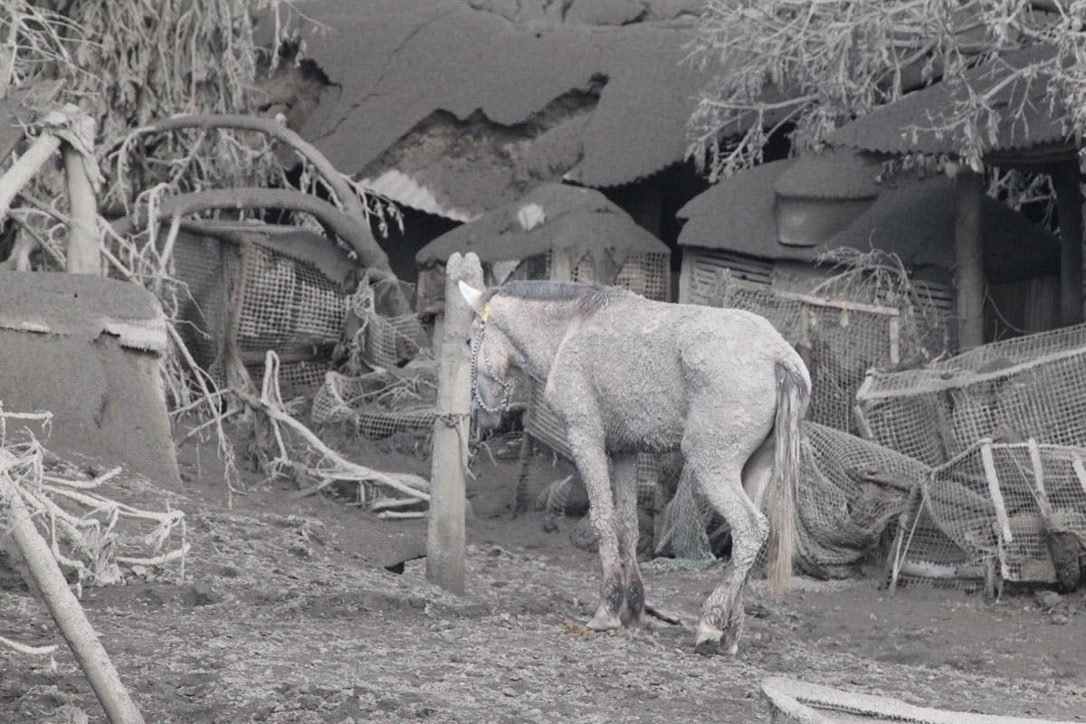 Taal Disaster: 'We Lost The Only Horse, House We Had'