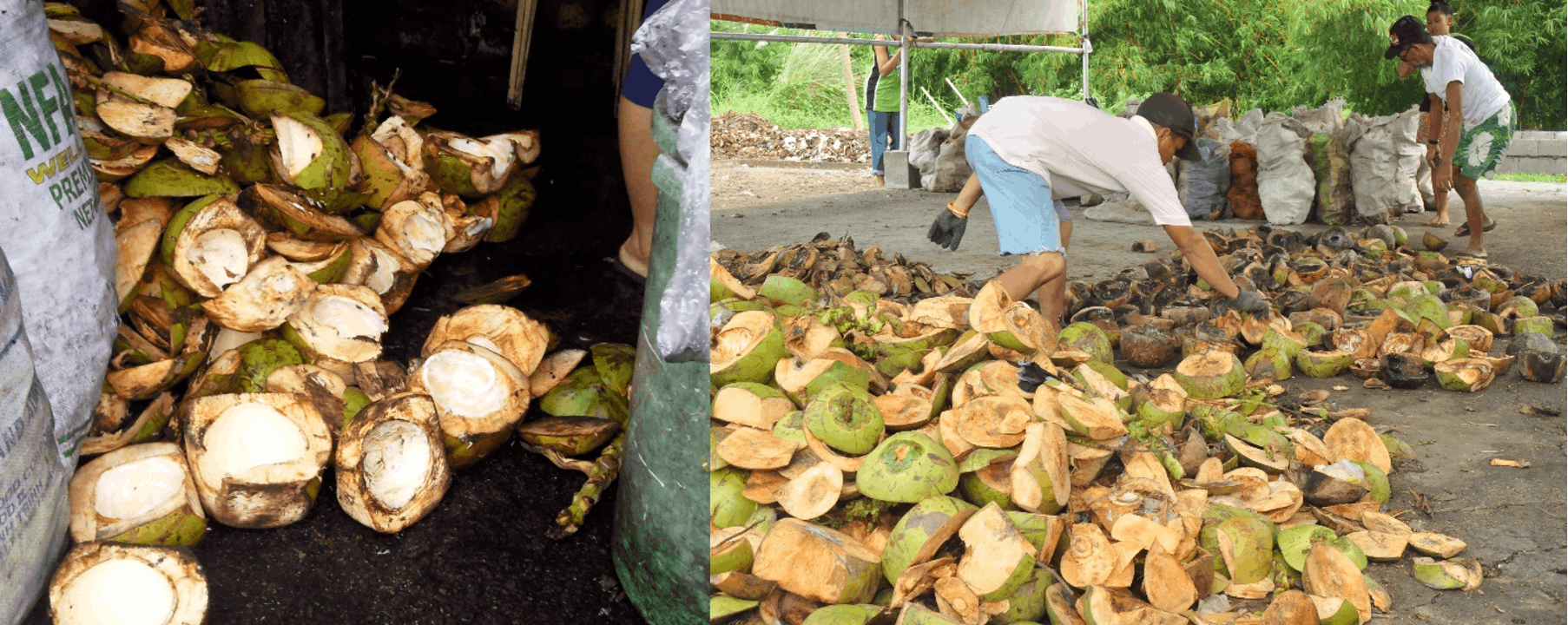 Villar Turns Coconut Wastes Into A Viable Source Of Income, Sustainable Waste Management Initiative