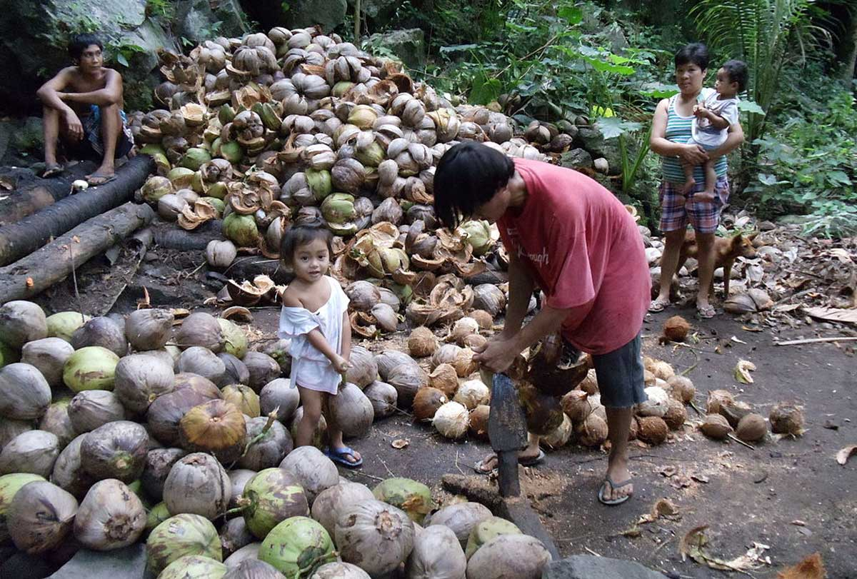 Coco Levy Fund: What Now? | OneNews.PH