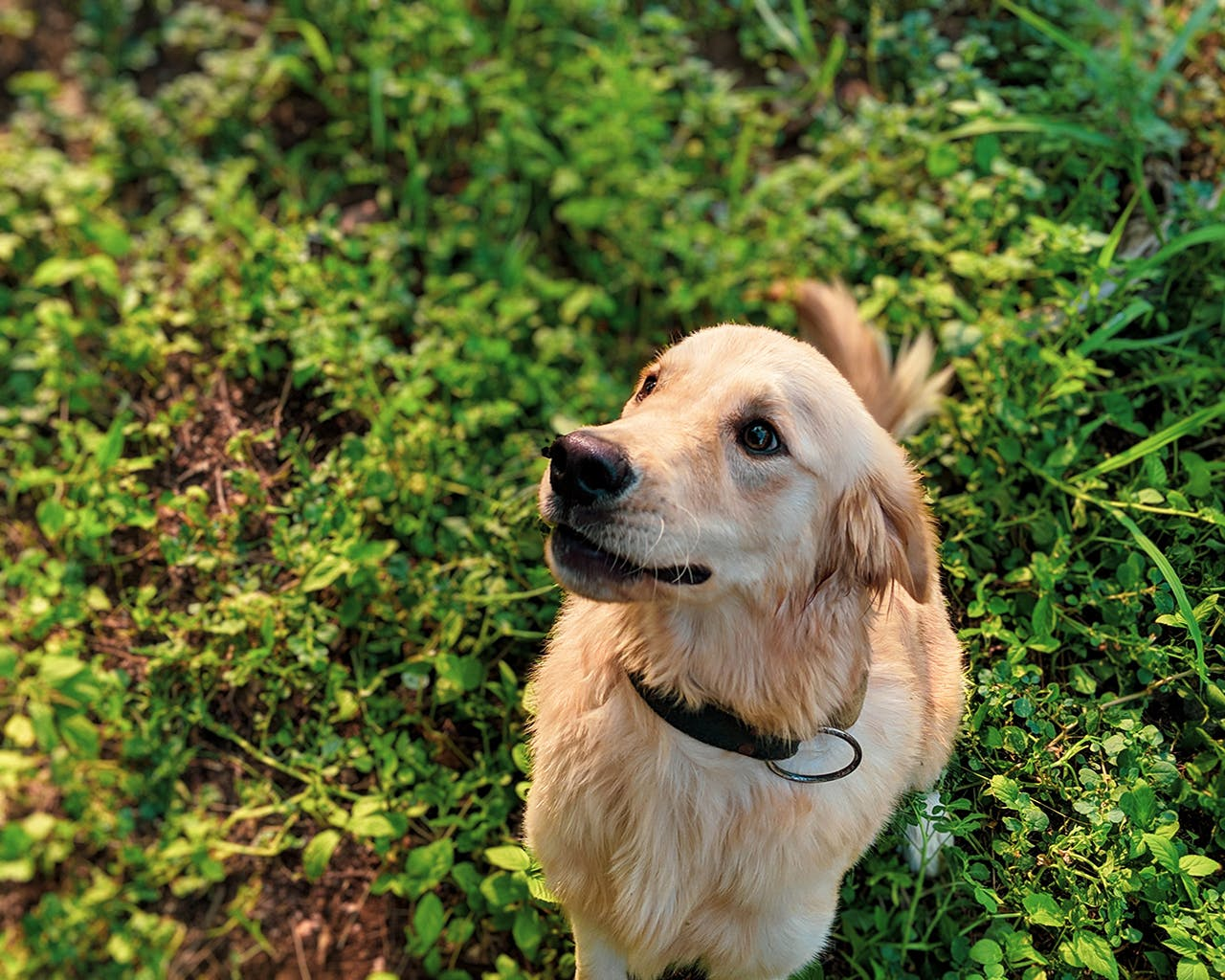 Before Getting Your First Pet Dog, Here Are 7 Things You Need To Know