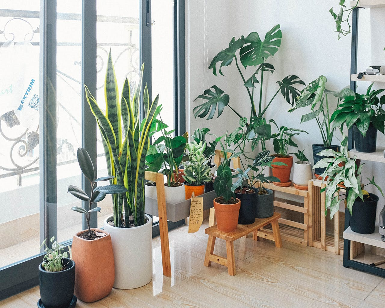 Redecorating? These 7 Indoor Plants Will Make Your Living Room Look 'Sosyal'