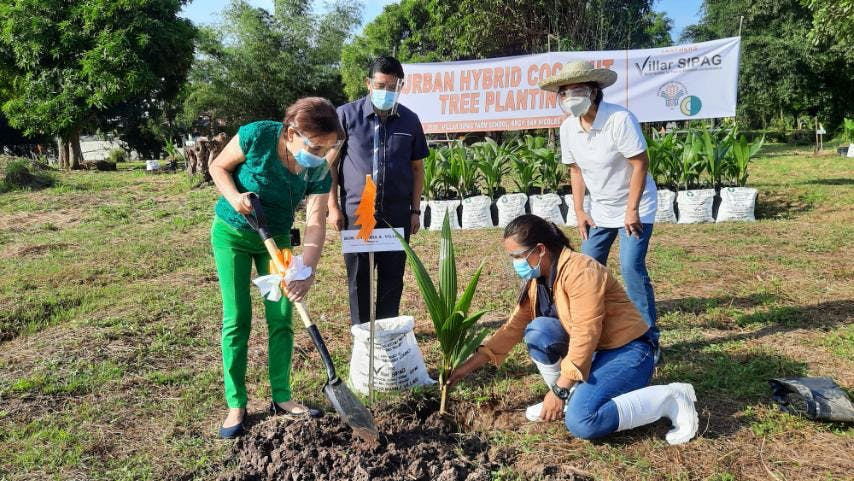 Coco Levy Act To Benefit 3.5M Filipino Farmers And Spur The Development Of Coconut Industry