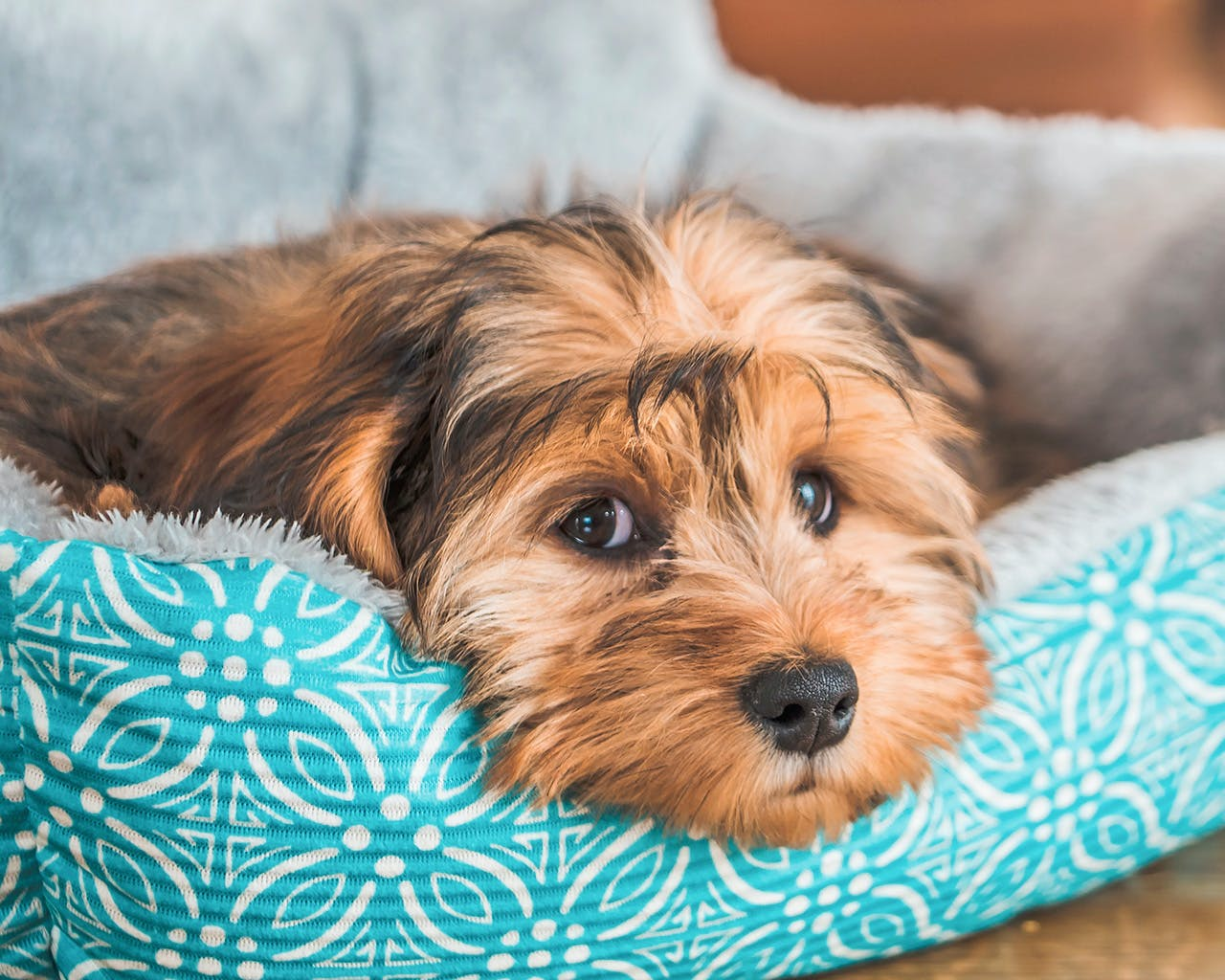 Beware, Even Your Pets May Bite You! Here's What You Should Do If That Happens