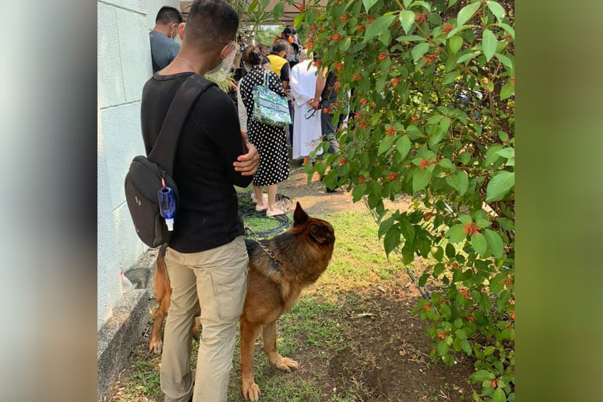 P-Noy's Favorite Dog Apollo Sad, Uneasy; Police Officers Who Took Care Of Aquino Join Full Military Honors