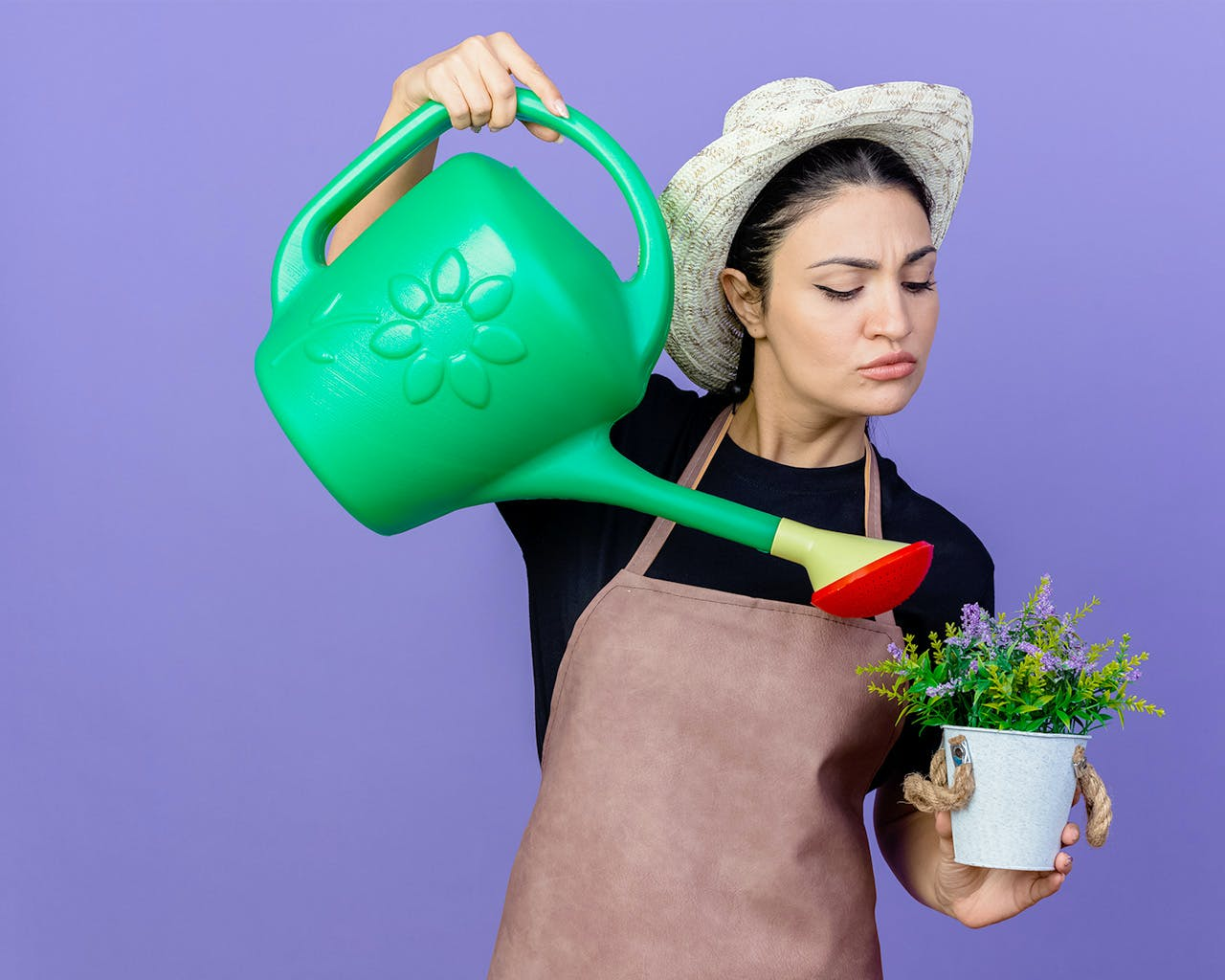 4 Gardening Myths Debunked + How To Solve Common Houseplant Problems